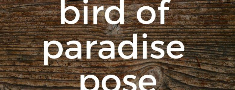 Bird of Paradise Pose Pure Hot Yoga Bayswater Melbourne Yoga Classes