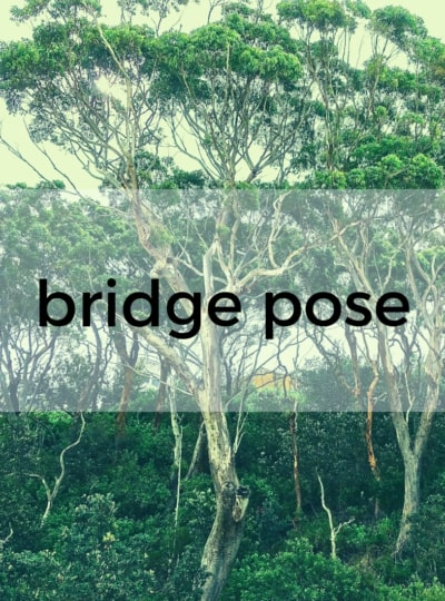 Bridge Pose Pure Hot Yoga Bayswater Melbourne Yoga Classes