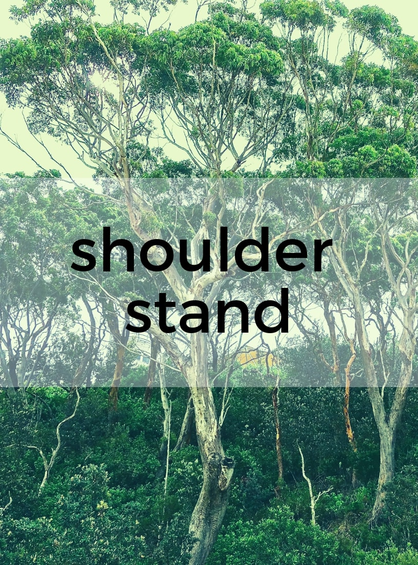Shoulder stand Hot Yoga Bayswater Melbourne Yoga Classes