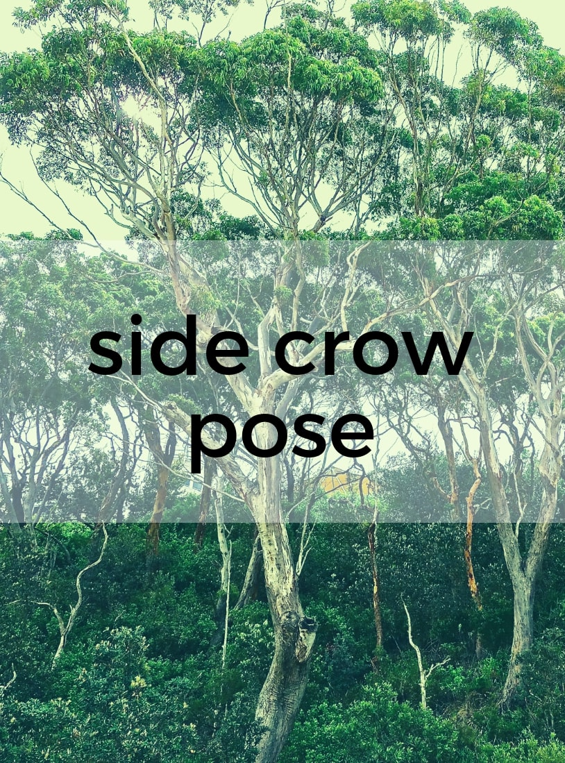 Side Crow Pose Pure Hot Yoga Bayswater Melbourne Yoga Classes