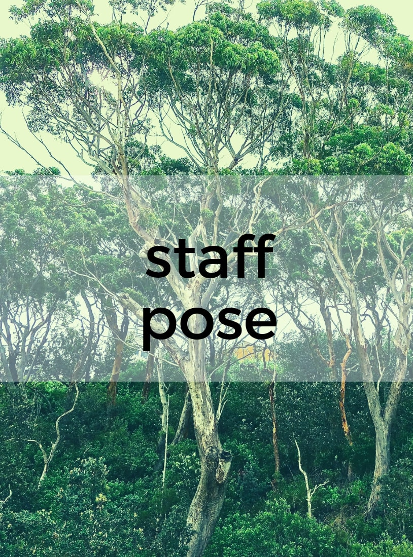 Staff Pose Pure Hot Yoga Bayswater Melbourne Yoga Classes