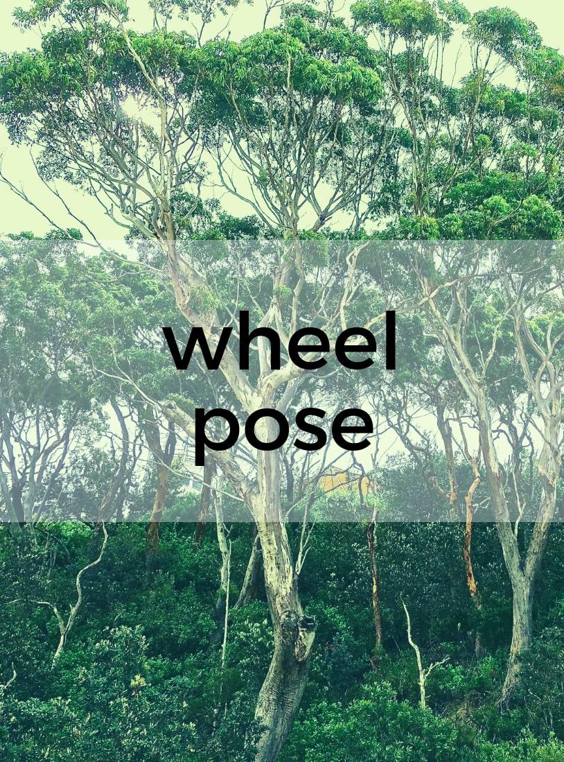 Wheel Pose Pure Hot Yoga Bayswater Melbourne Yoga Classes